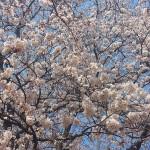 YunaYoga 4月/5月スケジュール