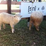 ヨガフェスタ横浜2017~羊と天然水